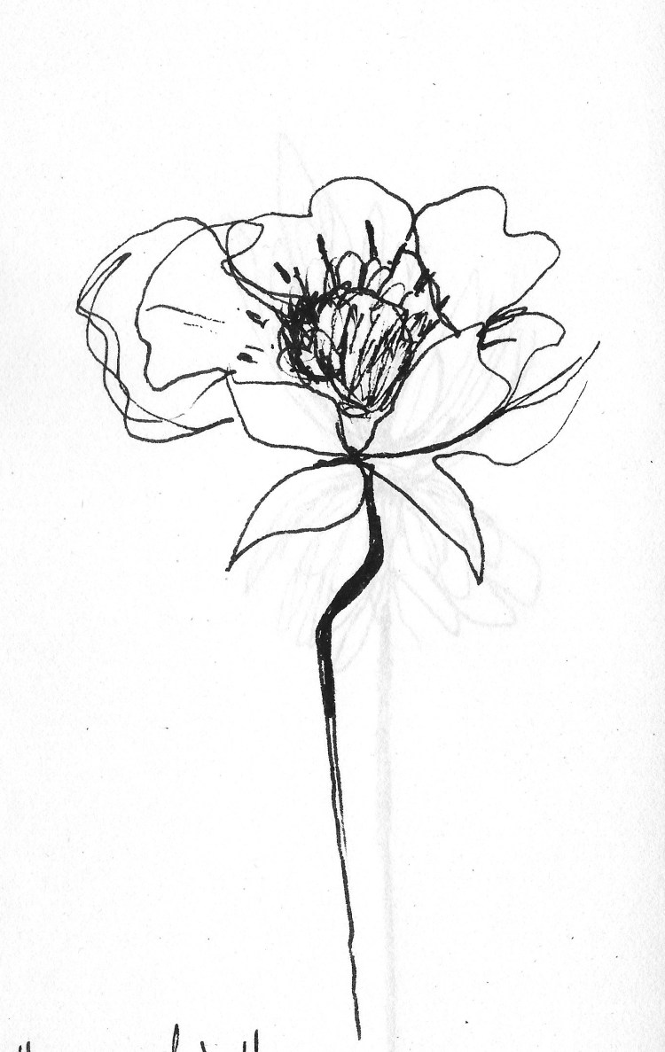 Drawing flowers 1