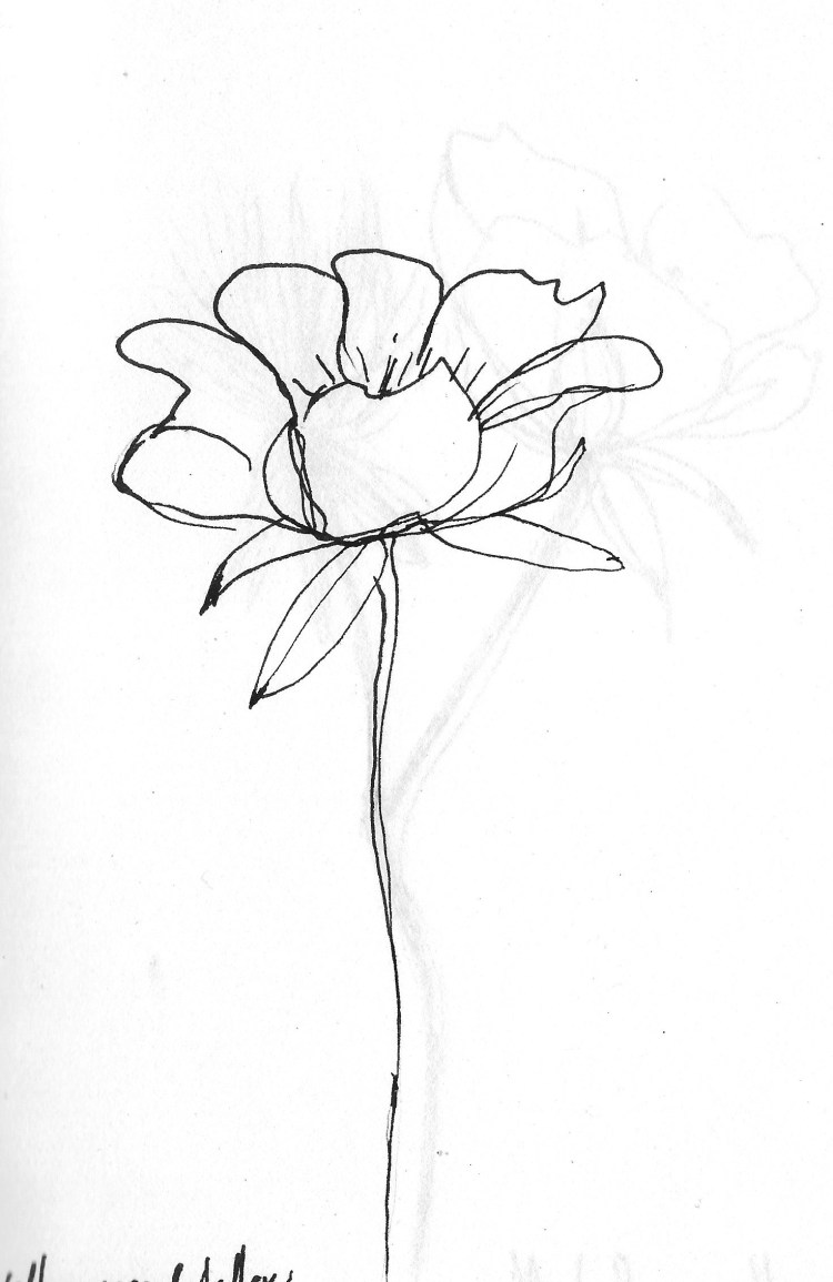 Drawing flowers 2