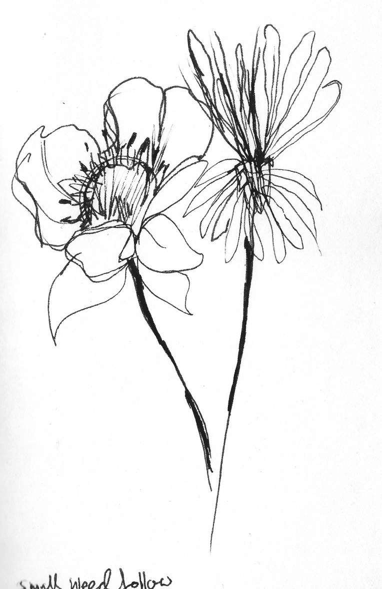Drawing flowers 3