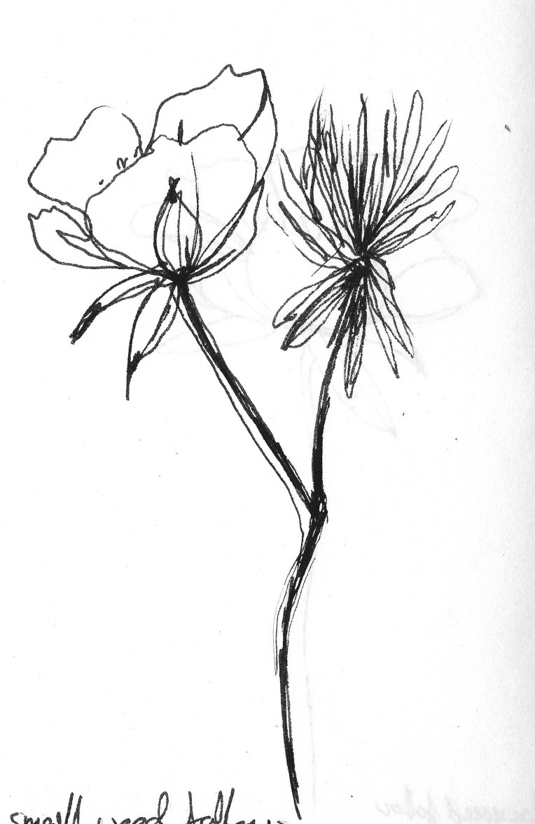 Drawing flowers 4