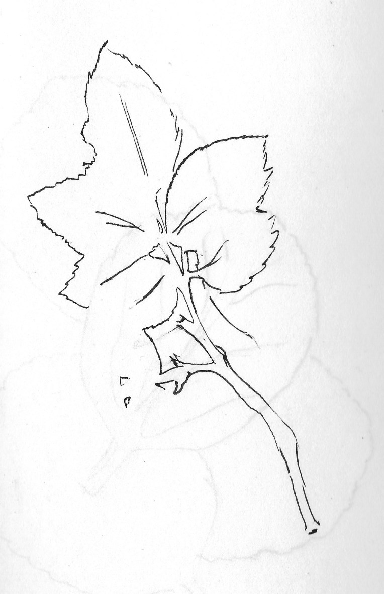 Drawing flowers 6