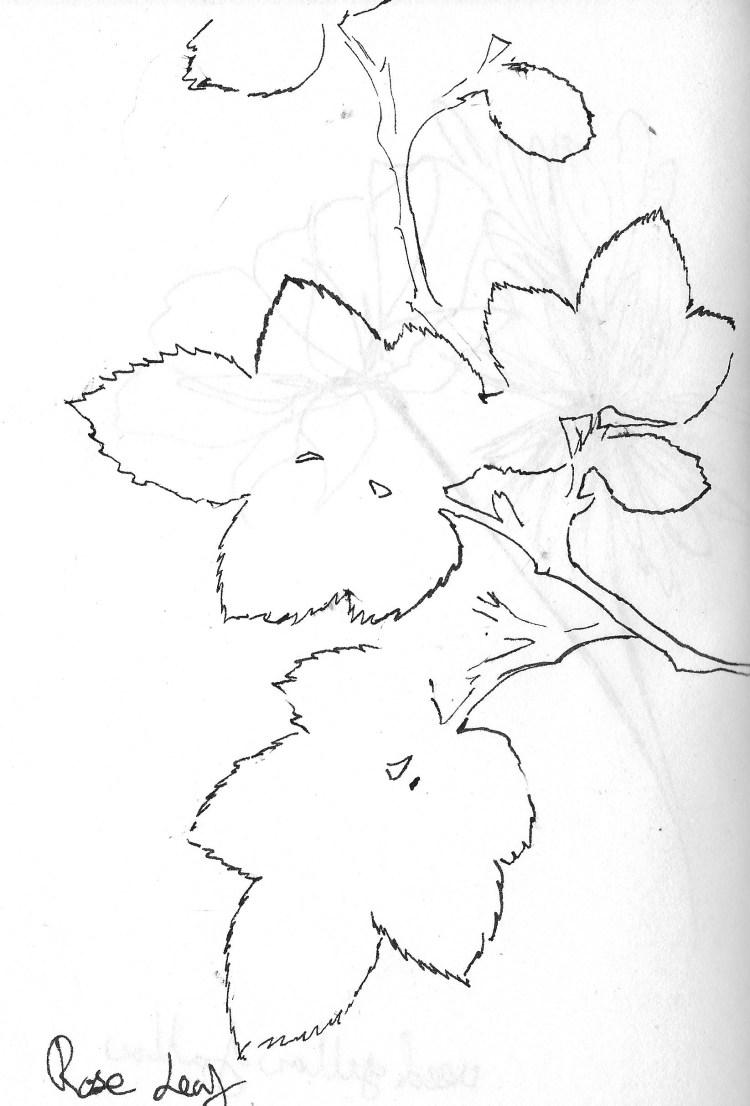 Drawing flowers 7