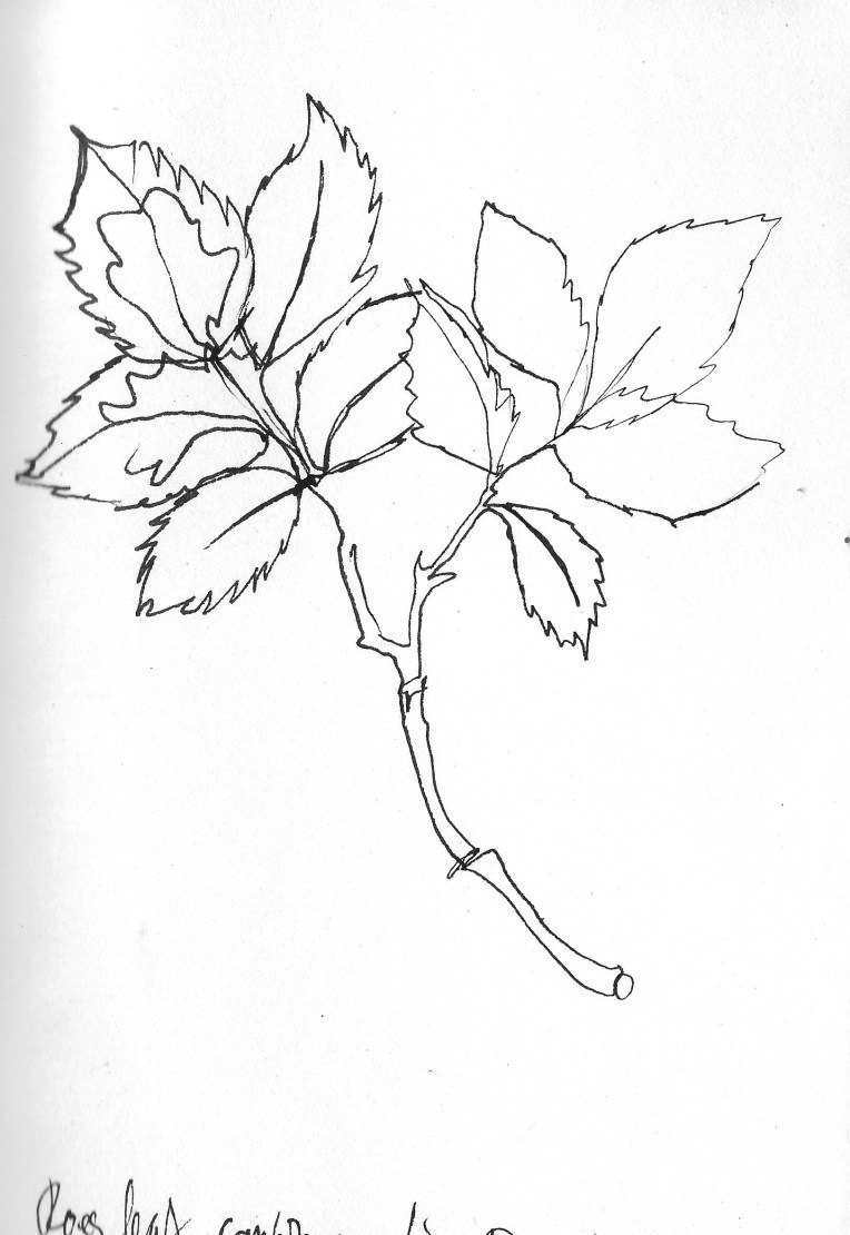 Drawing flowers 8