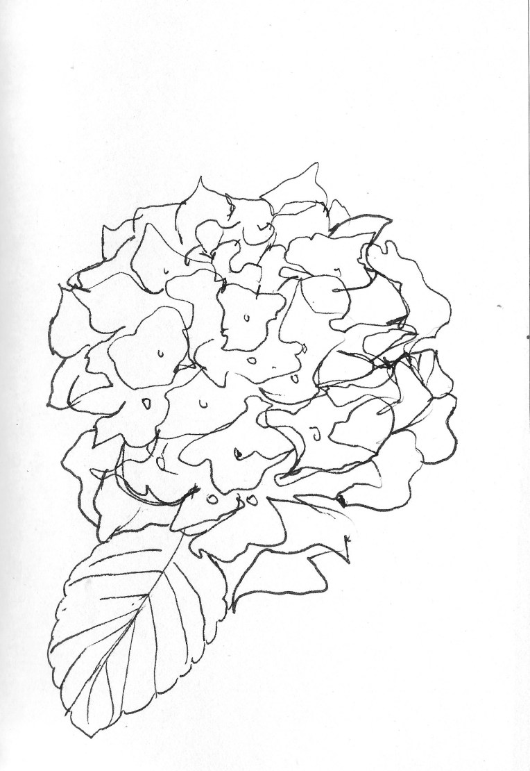 Drawing flowers 9